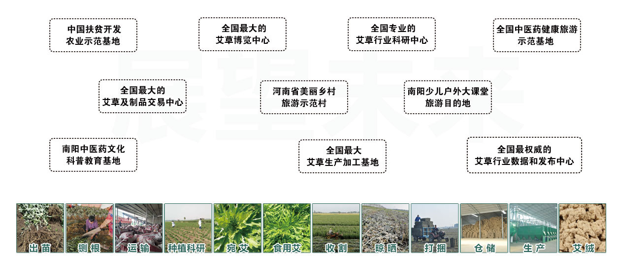 国医仲景艾草产业集团